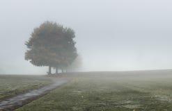 Ciężka zwarta mgła przy parkiem Obraz Stock