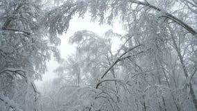 Ciężki śnieg spada w lesie zbiory wideo