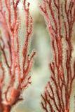 Ciężki koralowy makro- szczegół Fotografia Stock