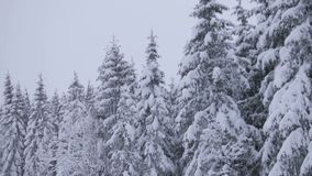 Ciężki opad śniegu na lesie w ruchu zbiory