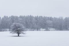 Ciężki opad śniegu przy Szwedzkim lasowym niedalekim Sztokholm obraz royalty free