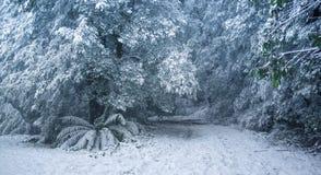 Ciężki opad śniegu w Australijskim lesie Fotografia Royalty Free