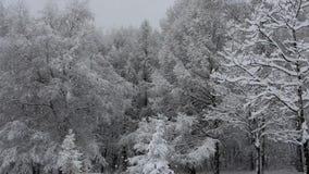 Ciężki opad śniegu w miasto parku zbiory wideo