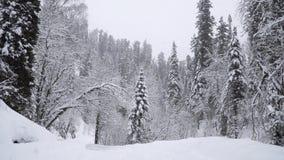 Ciężki opad śniegu w zima lesie zbiory