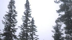 Ciężki opad śniegu w zimie w sosnowej zimy zimy lasowym Bajecznie lesie i nieba tle Obrazy Royalty Free