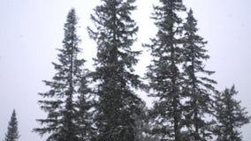 Ciężki opad śniegu w zimie w sosnowej zimy zimy lasowym Bajecznie lesie i nieba tle Zdjęcia Royalty Free