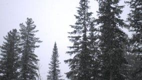 Ciężki opad śniegu w zimie w sosnowej zimy zimy lasowym Bajecznie lesie i nieba tle Obrazy Stock