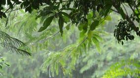 Ciężki podeszczowy spadać na drzewie w ogródzie zbiory wideo