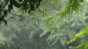 Ciężki podeszczowy spadać na drzewie w ogródzie zbiory