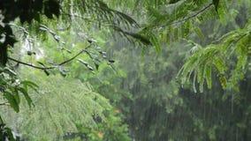 Ciężki podeszczowy spadać na drzewie w ogródzie zdjęcie wideo
