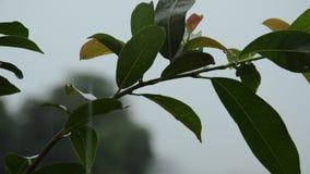 Ciężki podeszczowy spadać na liściu w ogródzie zbiory