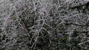 Ciężkiego śniegu burza daje nagiemu krzaka spojrzeniu abstrakt zbiory wideo