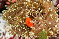 Ciężkiego korala zakończenia up szczegół makro- obraz royalty free