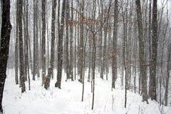ciężkiego opadu śniegu drewna Fotografia Royalty Free