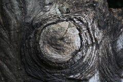 cięcie fiszorka drzewo Zdjęcie Stock