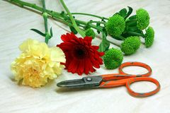 Cięcie kwiaty Obrazy Stock