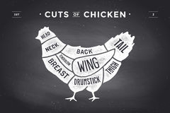 Cięcie mięso set Plakatowy masarka diagram i plan - kurczak Rocznika typograficzny pociągany ręcznie również zwrócić corel ilustr Obrazy Royalty Free