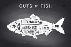 Cięcie mięso set Plakatowy masarka diagram i plan - ryba Zdjęcie Stock