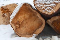 Cięcie puszek drzewo w śniegu obraz stock