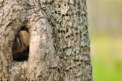 Ci è un foro in quell'albero Fotografia Stock
