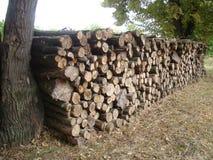 cięcie drewna Fotografia Stock