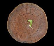 Cięcie korkowy drzewo 17 Zdjęcie Royalty Free