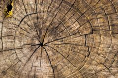 cięcie tekstury drewna Obrazy Stock