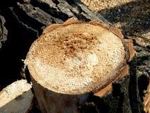 cięcie wyszczególnia drzewa Zdjęcie Stock