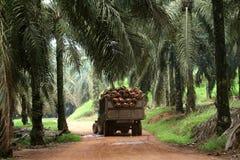 Ciągnik w nafcianej palmy plantaci - serie 4 Obrazy Royalty Free