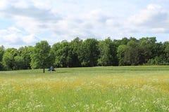 Ciągnik w polu Zdjęcia Royalty Free