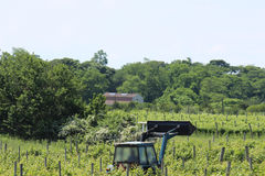 Ciągnik w winnicy Fotografia Stock