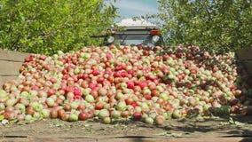Ci?gnika przewieziony drewniany zbiornik pe?no jab?czane owoc zdjęcie wideo