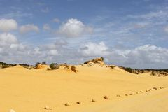 Żółci piasków sunes w pinaklach dezerterują, Nambung park narodowy, zachodnia australia Obraz Royalty Free