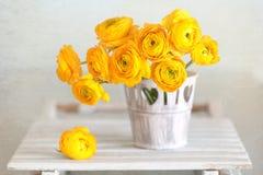 Żółci ranunculus kwiaty Fotografia Stock
