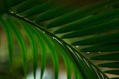 Ci?rrese encima de las hojas de palmeras fotos de archivo