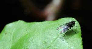Ci?rrese para arriba de la poca mosca en la hoja verde metrajes