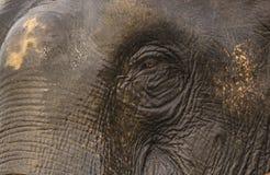 Ci?rrese para arriba de un ojo del elefante imagen de archivo