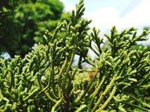 Ci sono molti generi differenti di alberi immagini stock libere da diritti