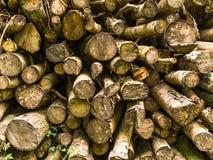 cięte drzewa Zdjęcia Stock