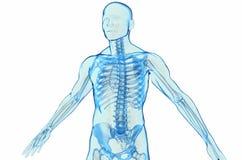 Ciało Ludzkie royalty ilustracja