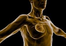 Ciało ludzkie starszy, osoba stara, serce ilustracji