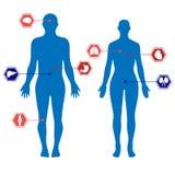 Ciało ludzkie sylwetki mężczyzna, kobieta i organy Fotografia Royalty Free