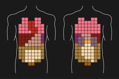Ciało ludzkie wewnętrzni organy Zdjęcia Stock