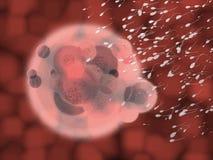 ciało krwi komórek spermy czerwona organicznych Obrazy Stock