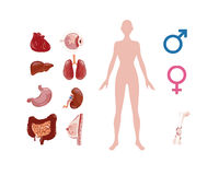 Ciało ludzkie komórki ilustracja wektor