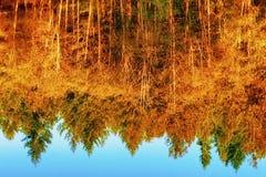 Ciało Odbija jesieni drzewa woda obraz stock