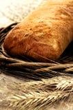 Ciabatta cocido fresco del pan con trigo Fotos de archivo libres de regalías