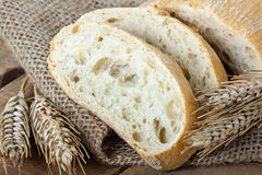 Ciabatta and wheat on with background Royalty Free Stock Photo