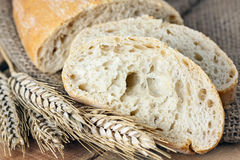 Ciabatta and wheat on with background Stock Image