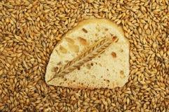 Ciabatta and wheat Royalty Free Stock Photos